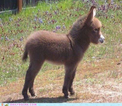 Baby Donkey kitties-and-wee-babies