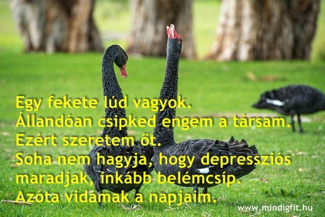 Mindig FIT egészséges élet és családbarát munka. www.mindigfit.hu Kapcsolat: kerdezek@mindigfit.hu