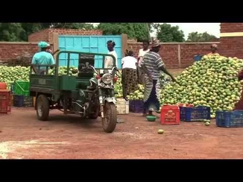 LE COMMERCE DE LA MANGUE SECHEE AU BURKINA FASO - YouTube