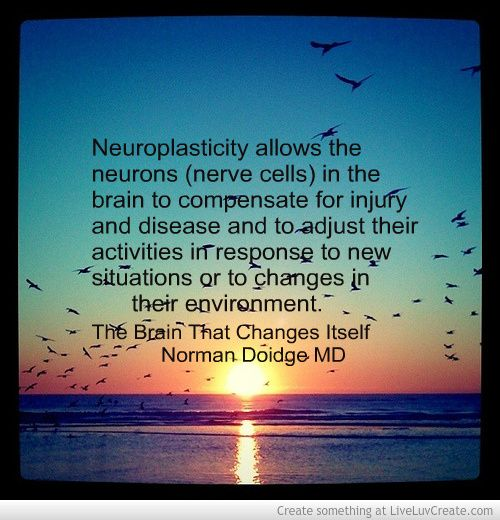 Superb The Brain That Changes Itself