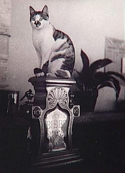 Le chat du bistrot, Brassaï  - 1944. -  Réunion des Musées Nationaux-Grand Palais -