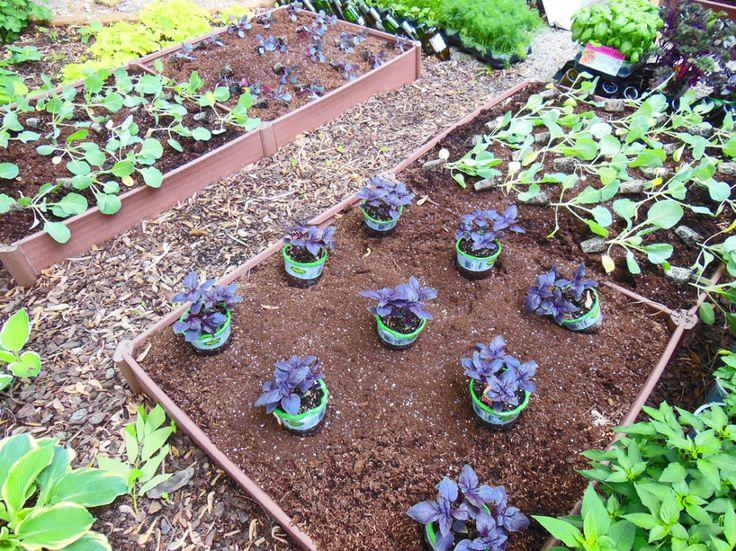 growing veggies in the shade