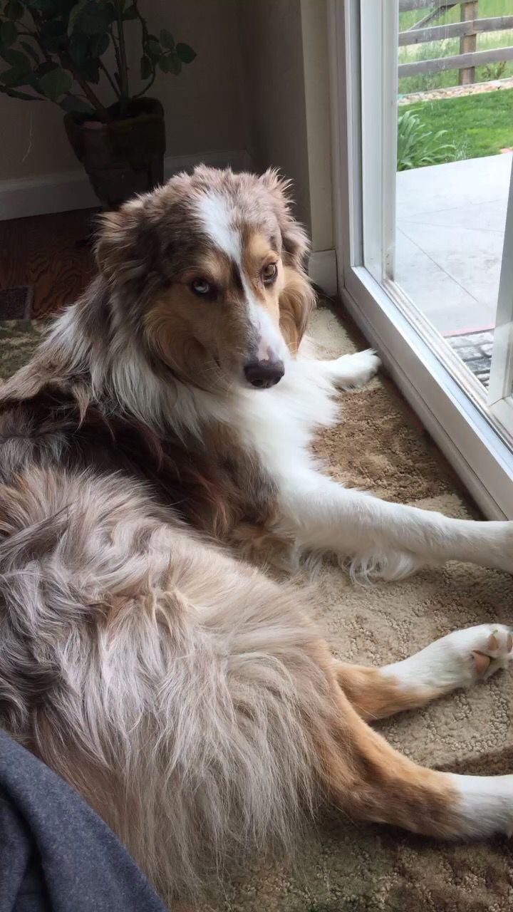 best puppies images on pinterest fluffy pets funny animals
