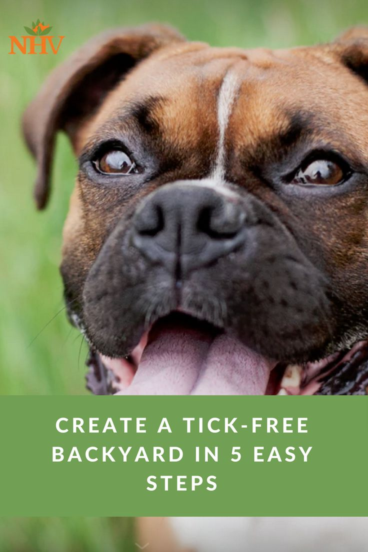 51 best heart health for pets images on pinterest heart health