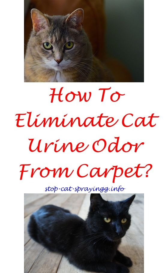 Deodorize Carpet Cat Urine Meze Blog