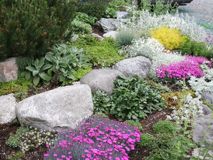 Perennials for rock gardens plants Pinterest Gardens