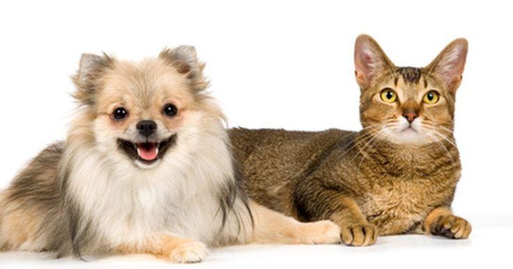 Tratamiento contra los ácaros cheyletiella. Los ácaros cheyletiella son capaces de causar complicaciones, como enfermedades de la piel, y requieren tratamiento inmediato. Hay tres tipos principales de ácaros cheyletiella, también conocidos como sarna cheyletiella y caspa caminante, cada uno de los cuales afecta a un animal específico. Los ácaros yasguri se ven típicamente en perros, gatos; ...