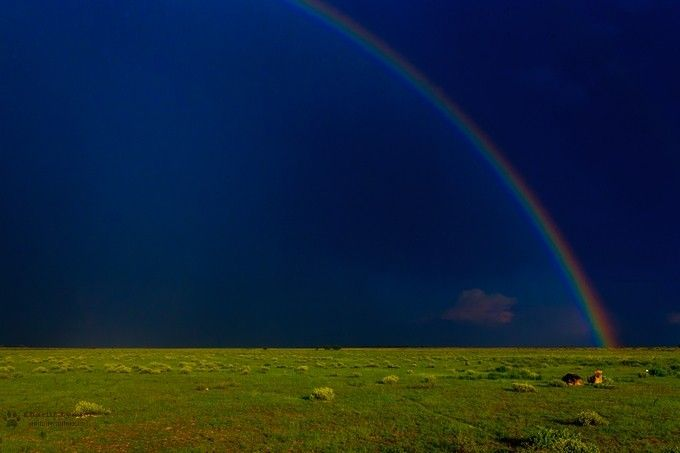 """""""LionsAtTheRainbow'sEnd"""" by charlielynam! Find more inspiring images at ViewBug - the world's most rewarding photo community. http://www.viewbug.com/photo/62146885"""