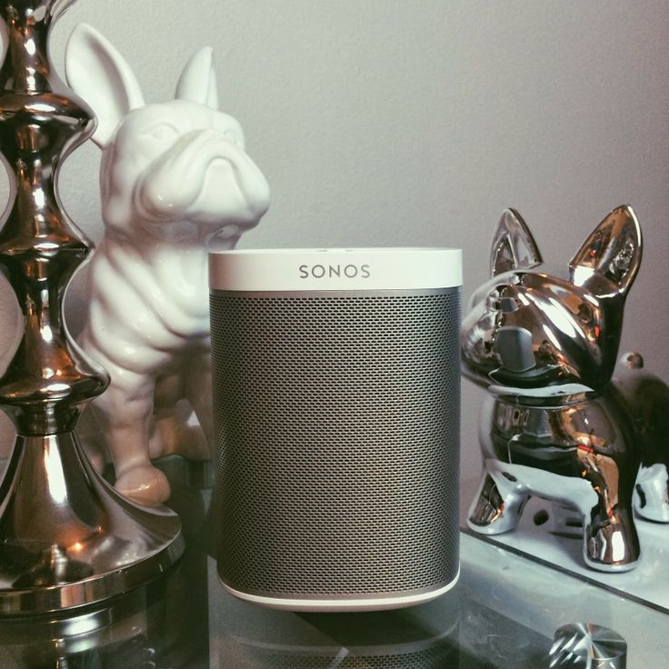 Sonos PLAY:1 With Its Dogs.