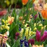 Plant+Your+Own+Aromatherapy+Garden
