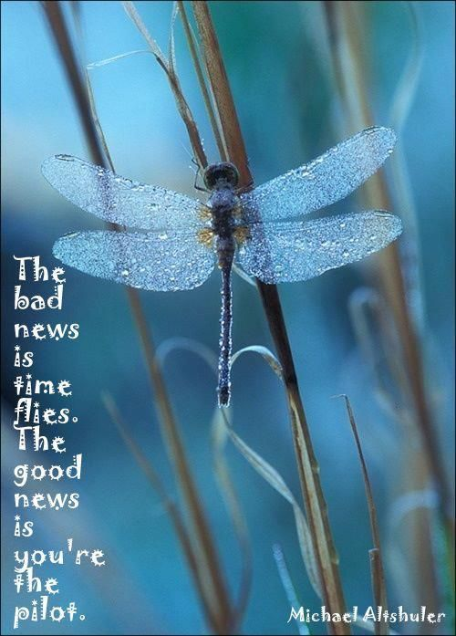 The bad news is time flies. The good news is you're the pilot. | Unknown Picture Quotes | Quoteswave