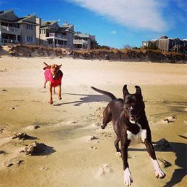 Planning a dog-friendly vacation in Virginia Beach.
