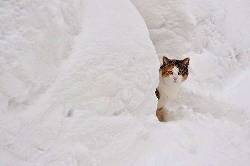 #Obroże odblaskowe dla kotów