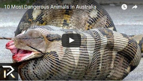 Beautifulplace4travel: 10 Most Dangerous Animals In Australia