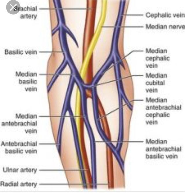 diagram of veins in wrist babies diagram of prophase in meiosis 2 32 best hernia images on pinterest | umbilical hernia ...