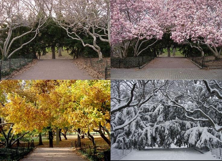 Four Seasons | Tony Zamora's Central Park | Seasons ...