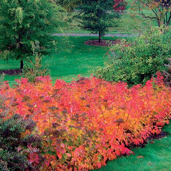 Garden Design Zone 3 wonderful garden design zone 3 4 a rain s with decor