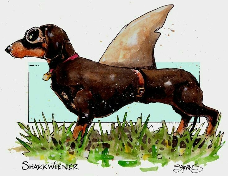 Every Day Dogs Tumblr Com Perros Arte Dachshund Animales