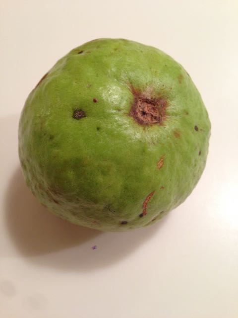 Guava Fruit Tree | My Taste Test of this Tropical Fruit