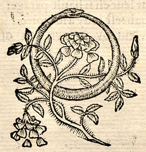 """From Barthélemy Aneau's """"Imagination poétique,"""" 1552 ~ Carl Jung vio en el ouróboros el mandala básico de la alquimia que existe desde la antigüedad (se remontó a la mitología egipcia). Anunció que esa serpiente engulléndose a sí misma uno de los arquetipos de la psique humana."""