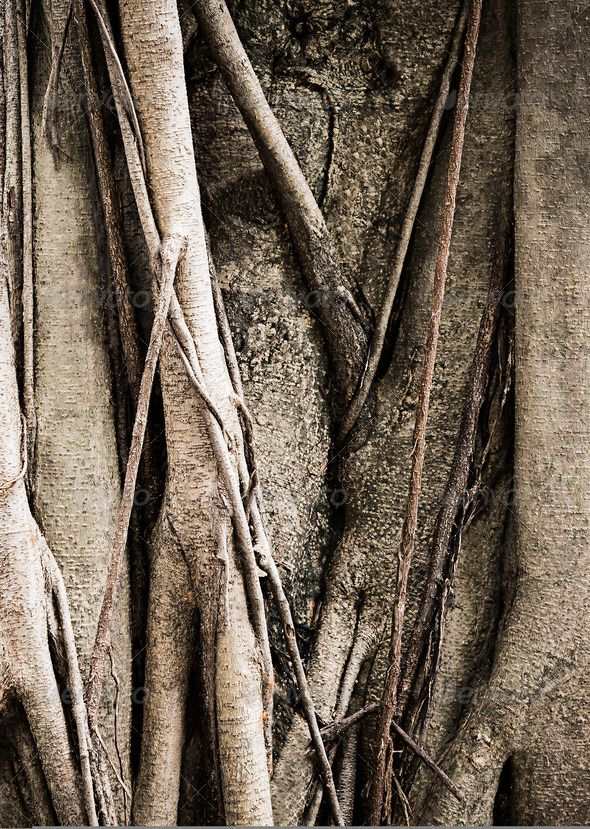 DOWNLOAD :: https://realistic.graphics/article-itmid-1006040468i.html ... Banyan Tree ...  background, brown, cracked, detail, natural, nature, plant, rough, texture, tree, wood, wooden  ... Templates, Textures, Stock Photography, Creative Design, Infographics, Vectors, Print, Webdesign, Web Elements, Graphics, Wordpress Themes, eCommerce ... DOWNLOAD :: https://realistic.graphics/article-itmid-1006040468i.html