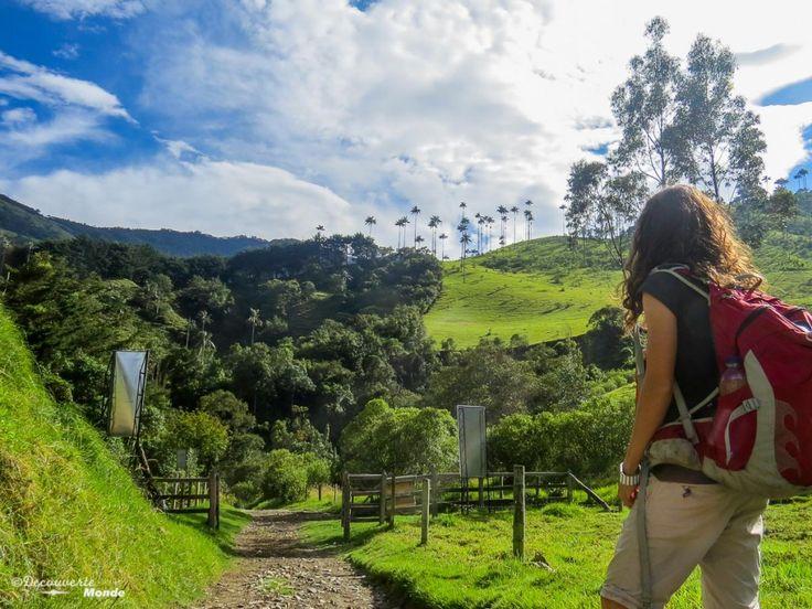 La vallée de Cocora en Colombie