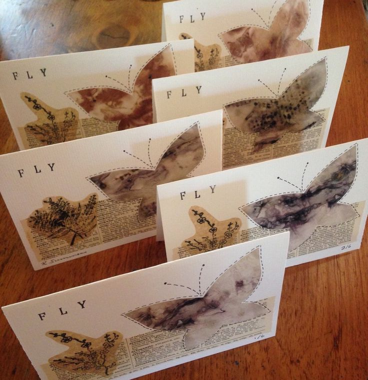 'fly' greeting cards