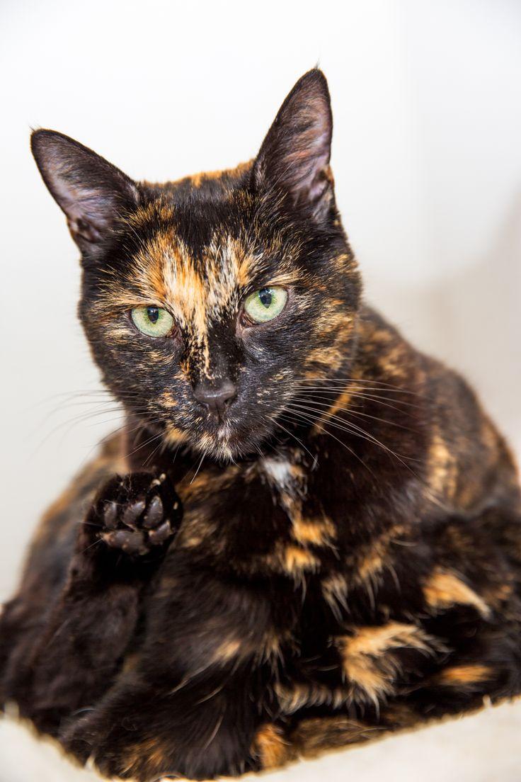 Sweet Mira | Custom Pet Photography, Zurich, Massgeschneiderte Tierfotografie, Zürich, Katzen, Cats, Tierfotografie