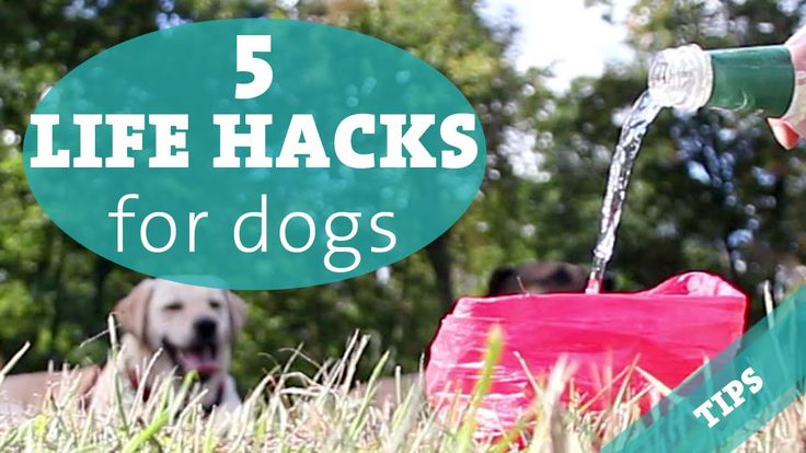 dog life hacks | 5 LIFE HACKS every dog owner should know – dog channel