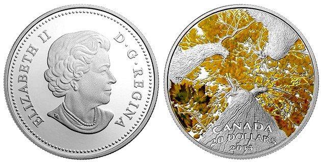 Premios COTY 2016 - Canadá 20 Dólares - Árboles de Arce desde abajo
