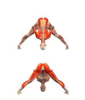 ૐ YOGA ૐ Prasarita Padottanasana ૐ Amplitud de Piernas. Flexión hacia adelante. con Manos a la Espalda en Namaste. Wide legged forward bend with hands in Namaste…