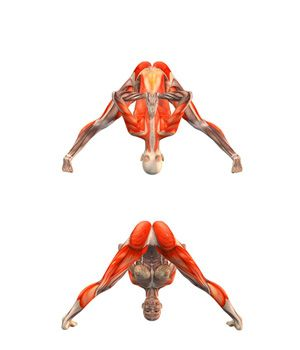 #PRASARITA PADDOTANASANA  Wide-legged forward bend with hands in Namaste | YOGA.com