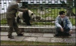 Panda Endangered Information Animals Giff #5421 - Funny Panda Giffs| Funny Giffs| Panda Giffs
