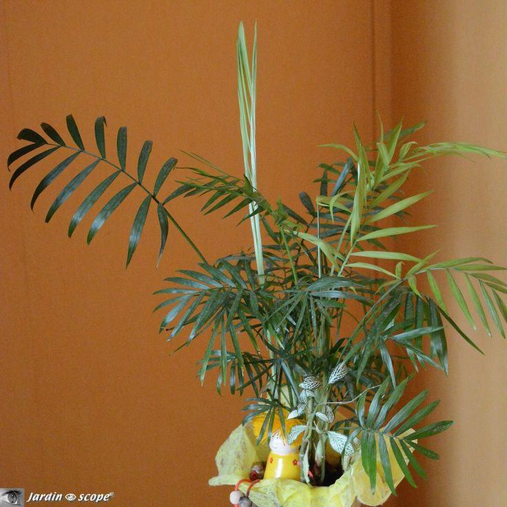 Les 25 meilleures id es de la cat gorie palmier nain sur pinterest engrais palmier - Engrais pour palmier ...