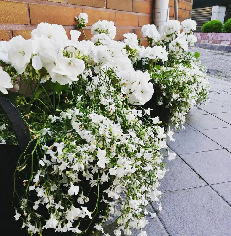 Ei tuu kesää ilman kukei #istutushommia #kotisäkki