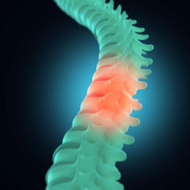 Πρωτεΐνη-«κλειδί» για τη θεραπεία της παράλυσης - science - Ιατρική – Βιολογία - Το Βήμα Online