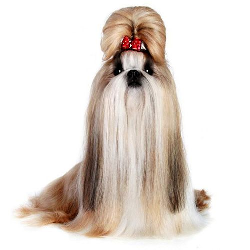 Pin em Este es mi Pet grooming salon