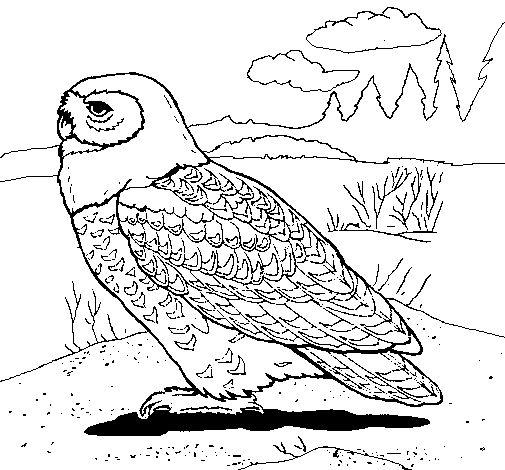 Dibujo de Búho nival para Pintar y Colorear en Línea