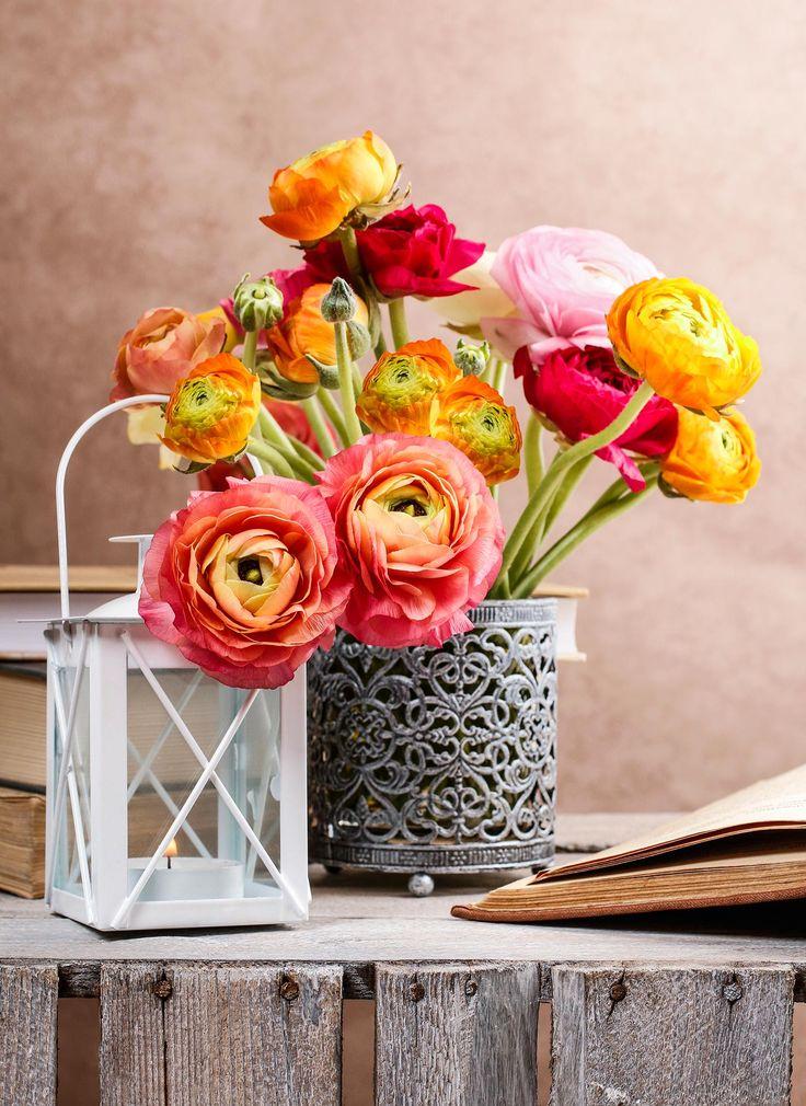 Die besten 25 Ranunkeln Ideen auf Pinterest  Ranunkel Ranunkeln strau und Ranunculus brautstrau