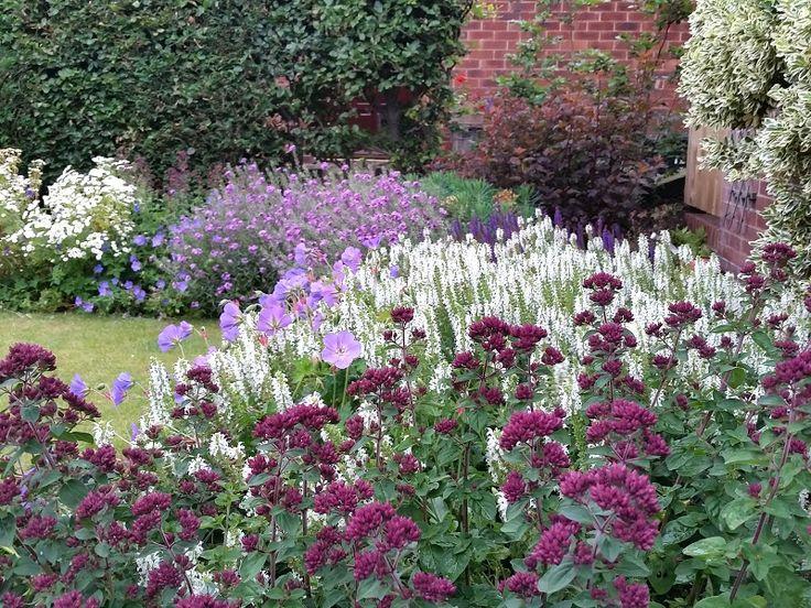 #gardendesign #staffordshire #cheshire #shropshire #plants #englishgarden  #plantcombinations #plantingdesign