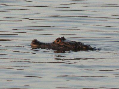 A Multitude of Death-Defying Acts on Lake Gatun: http://jonathonengels.travellerspoint.com/72/