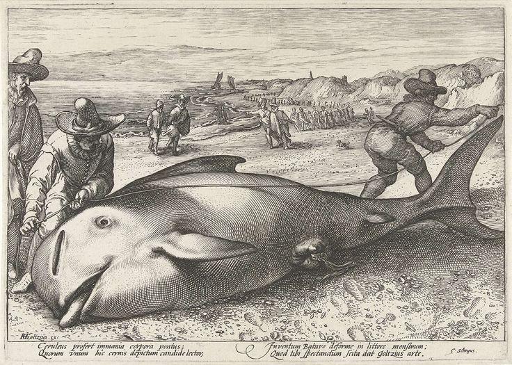 Gestrande griend op het strand bij Zandvoort, 1594, Hendrick Goltzius, 1594