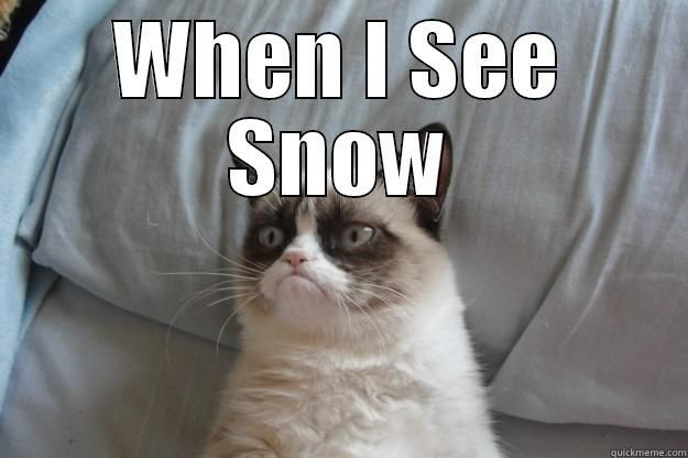funny cat snow -  Funny Animals  Pinterest  Cats, Funny cats and Snow
