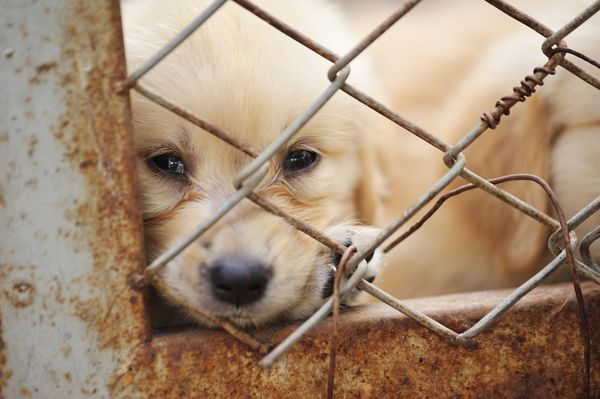 Los Angeles Bans the Retail Sale of Dogs, Crushing Puppy Mills | Dogster
