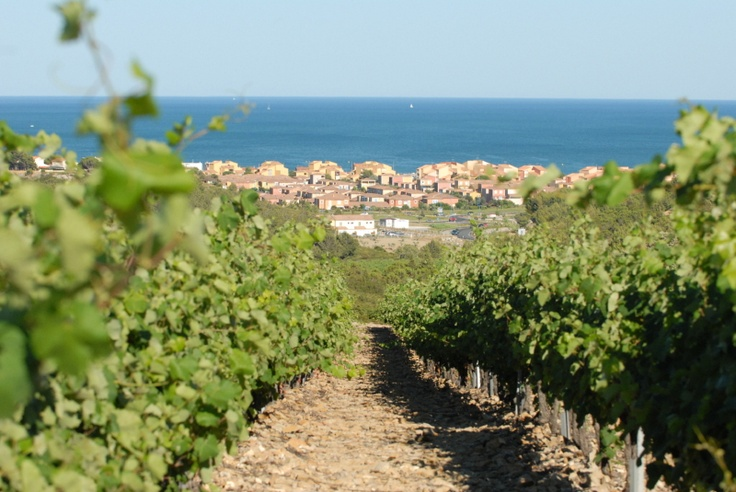 Vineyards looking towards Narbonne Plage, South of France