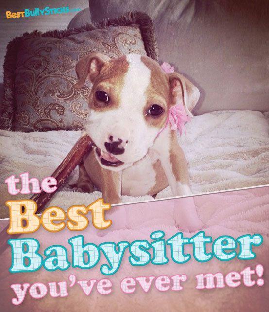 102 best images about all natural dog treats chews on pinterest dog c. Black Bedroom Furniture Sets. Home Design Ideas