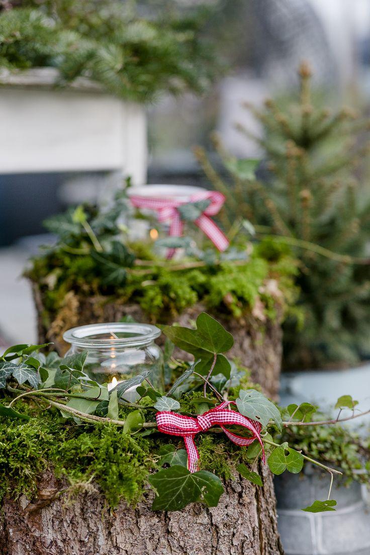 Weihnachtlicher Zauber im Novembergarten