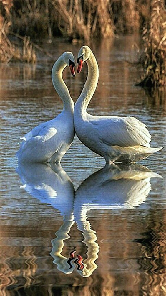 Reflection of Love