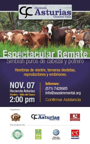 Remate Hacienda Asturias Simbrah Nov 7 2014, Ginebra, Valle