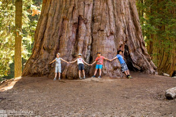 The Sequoia National Park in California, USA, photo